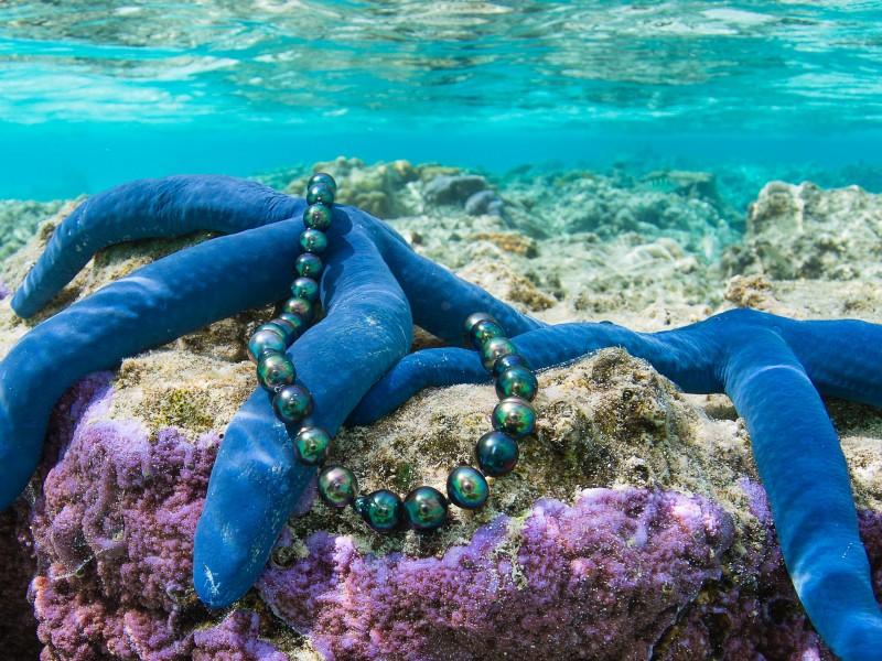 Avaiki pearls cook islands manihiki lagoon starfish in situ