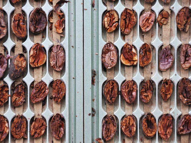 cacao beans venezuela criollo chocolate domori gourmet